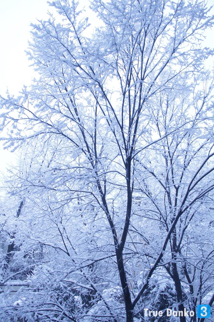 Winter 4 by TrueDanko3