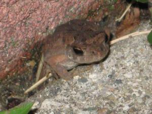 The Tiny Toad Closeup
