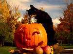 Halloween Kitty281
