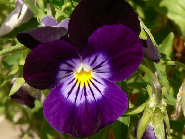 Purple Flower by magikwolf