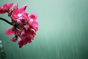 Rain 3 by KilCillian
