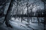Winter at Deer Grove