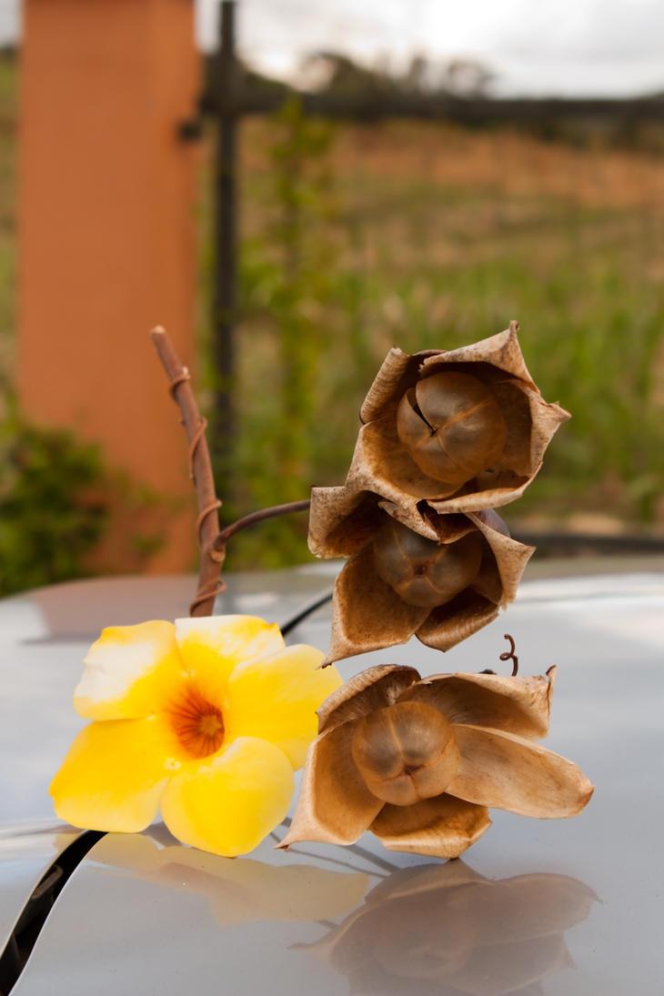 Rose des bois by shyamdefloreal on deviantart for Bois de rose meuble