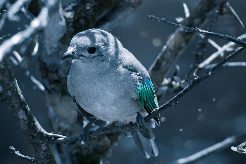 - Blue bird - by ldinami7e