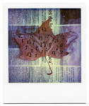 autumn music by buhoazul
