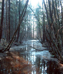 Forest river1 by stockhouse