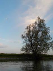 Sky Tree Moon by langeboom