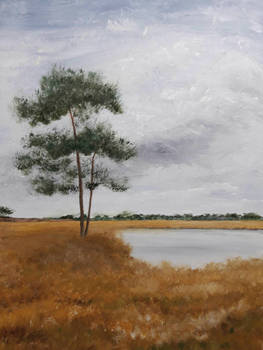 Pine and fens