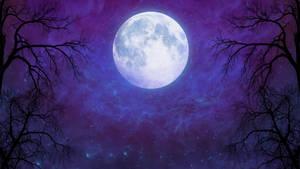 Magical night - wallpaper