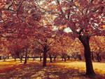 Fall - Stock by OriginStory