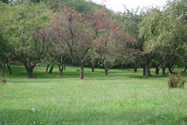 Trees stock