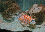 Lionfish by Brit31