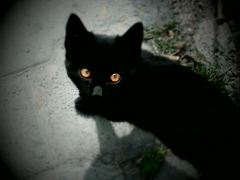 amber kitty 77