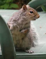 Squirrel 2 - 4 by E-Stock