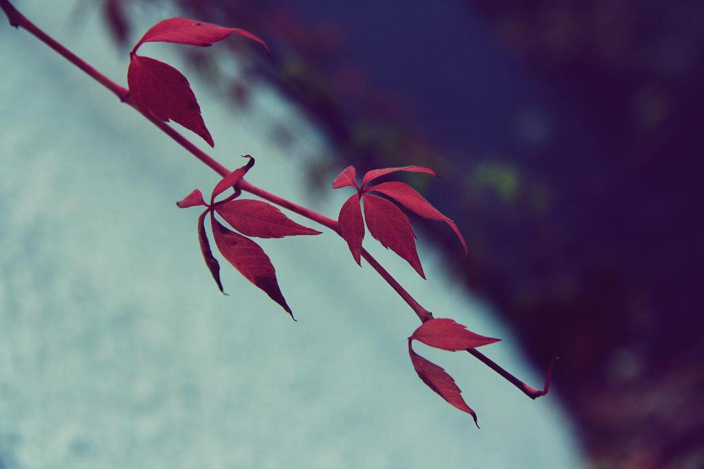 dffb by iris789