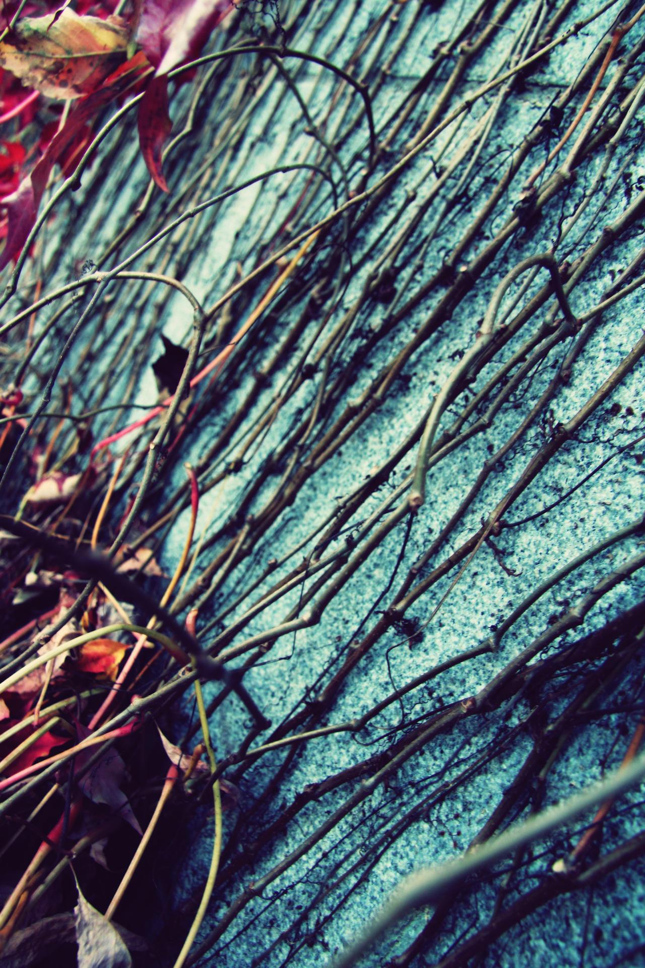 straws by iris789