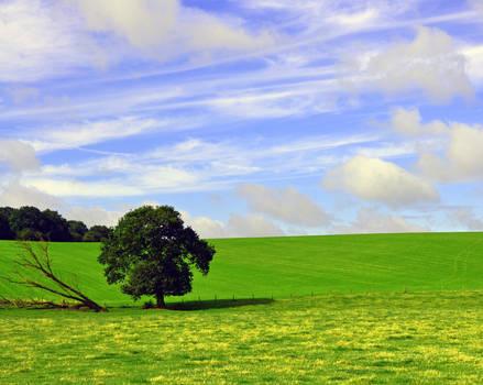 Landscape... by priwax