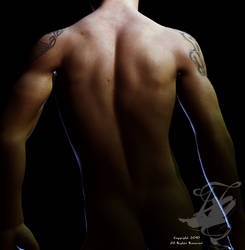 Male Back by nocturnalcuriosities