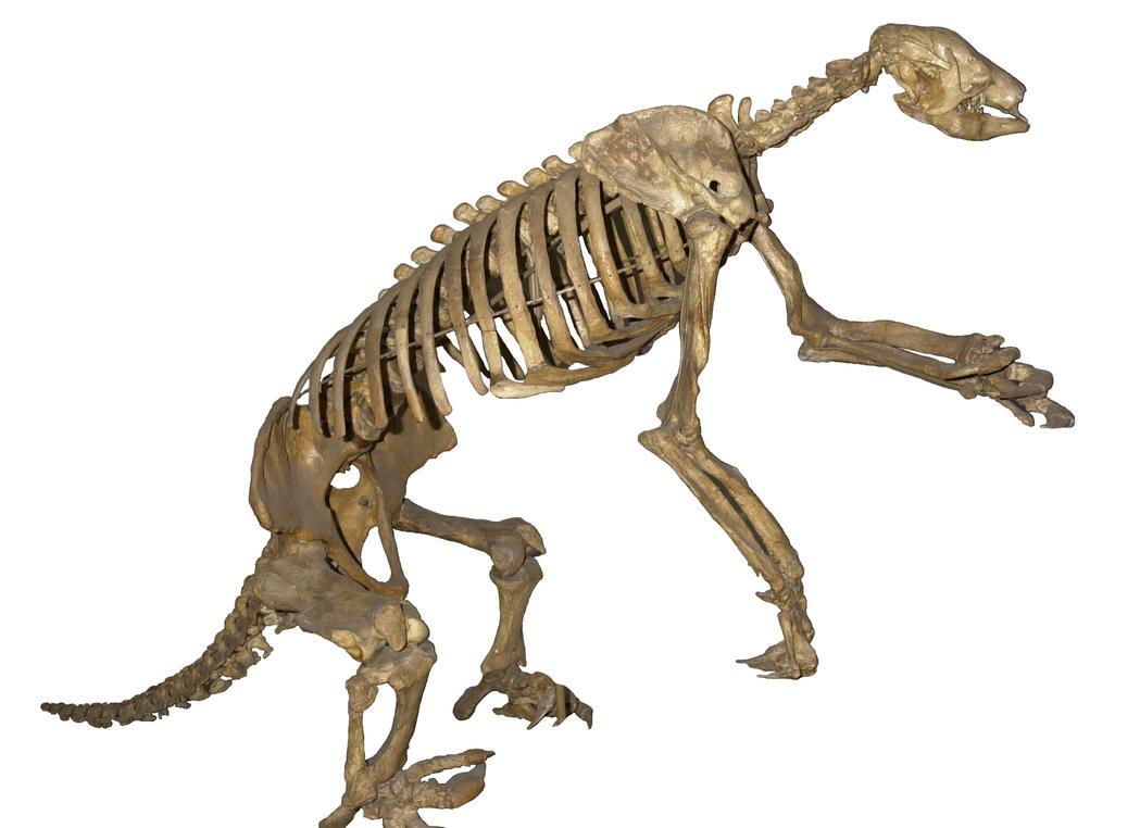 how to clean meat off bones to preserve bones