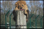 Of Logs and Lions