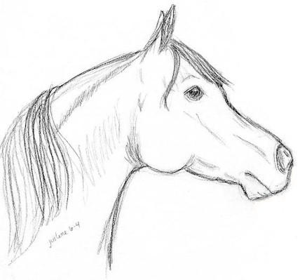 Horse head in pencil no 2 by albinowolf