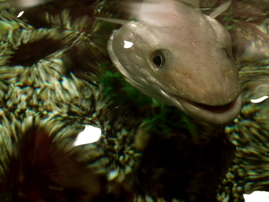 lakes aquarium 6 by harrietbaxter on DeviantArt