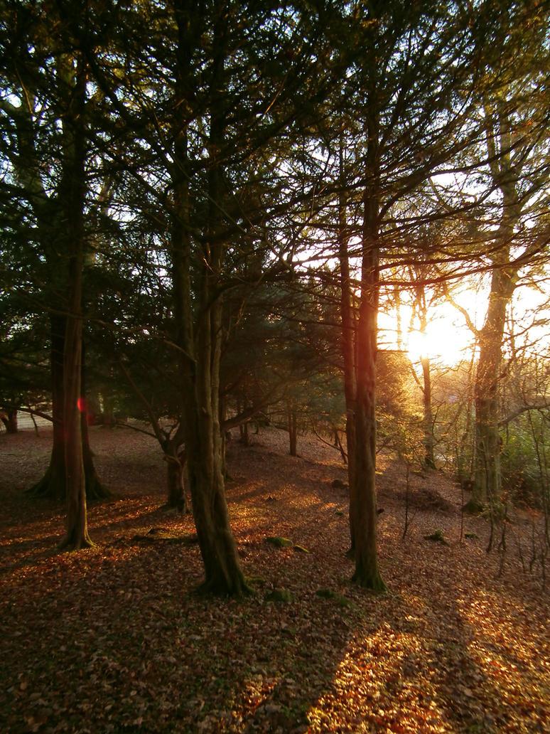 woodland sunset by harrietbaxter