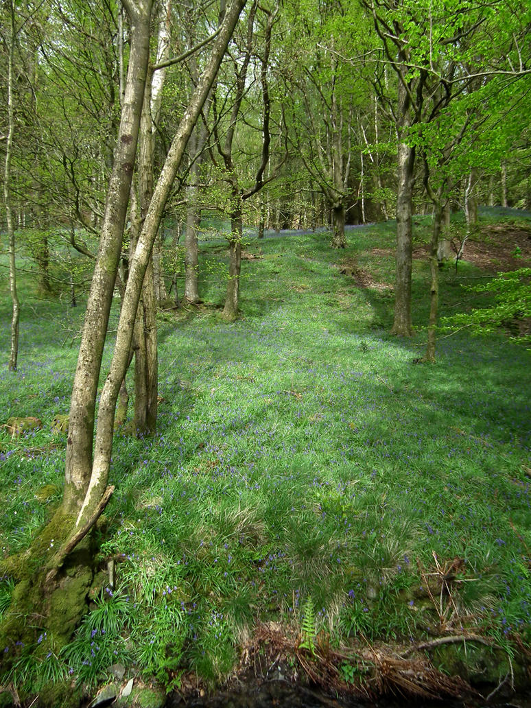 bluebell woods 5 by harrietbaxter