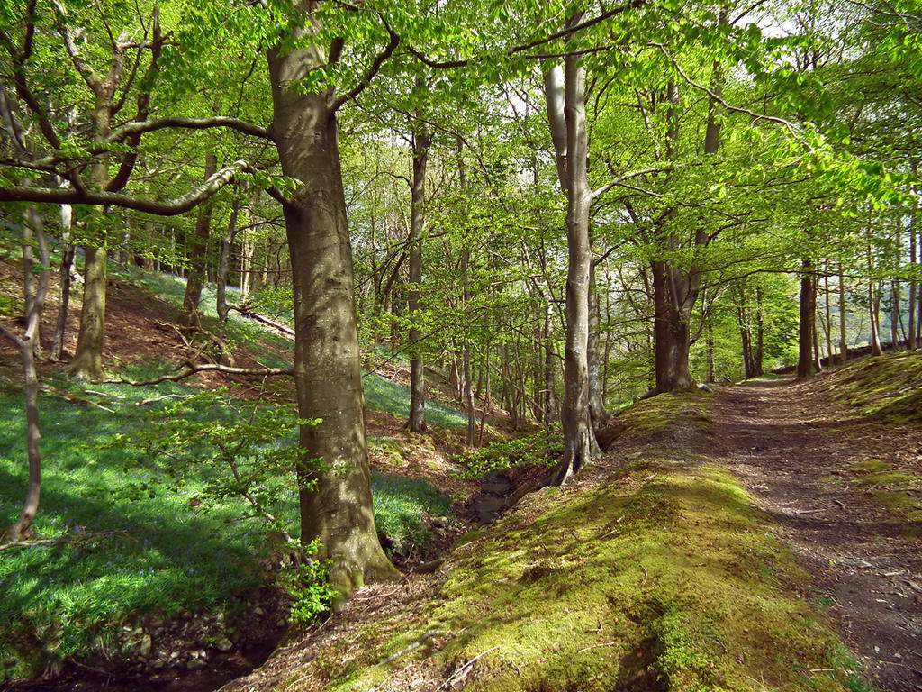 bluebell woods 6 by harrietbaxter