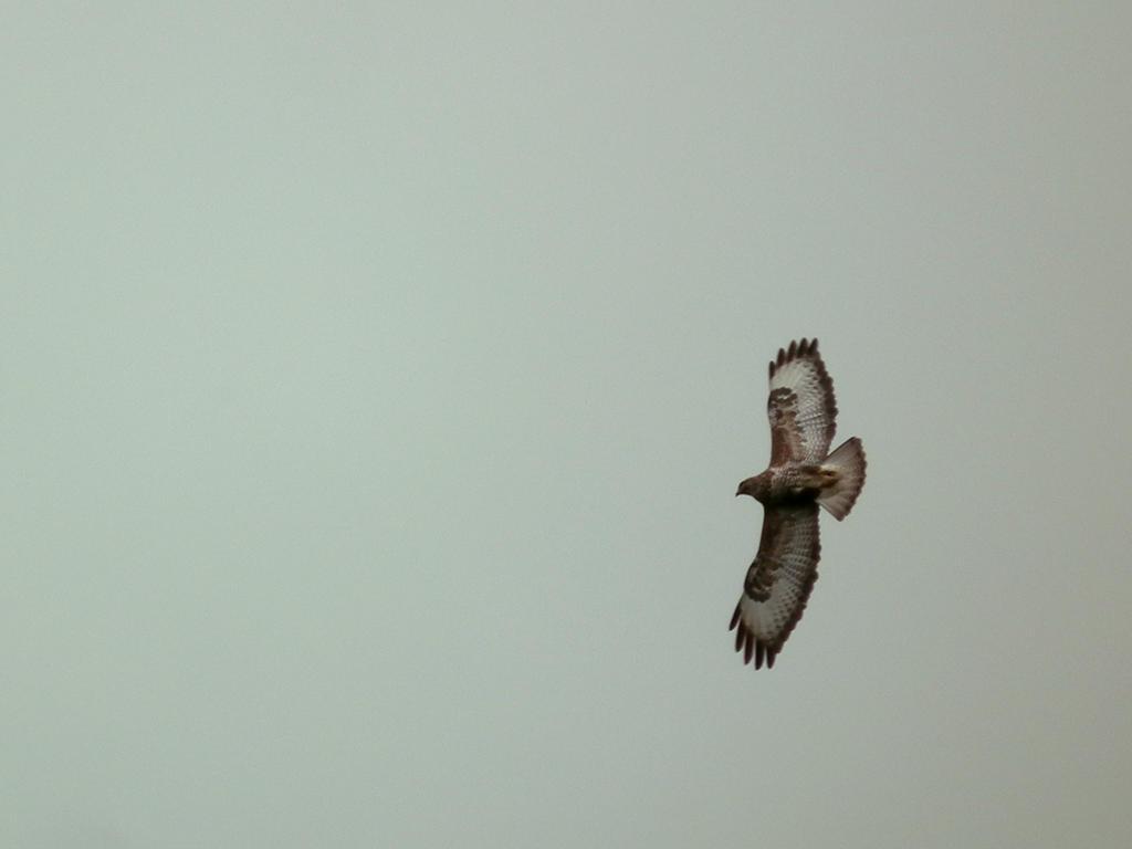 under buzzard by harrietbaxter