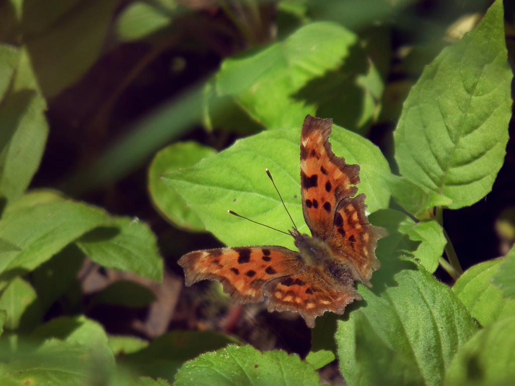 comma by harrietbaxter