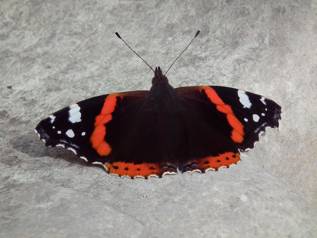 butterflies in the garden 13 by harrietbaxter