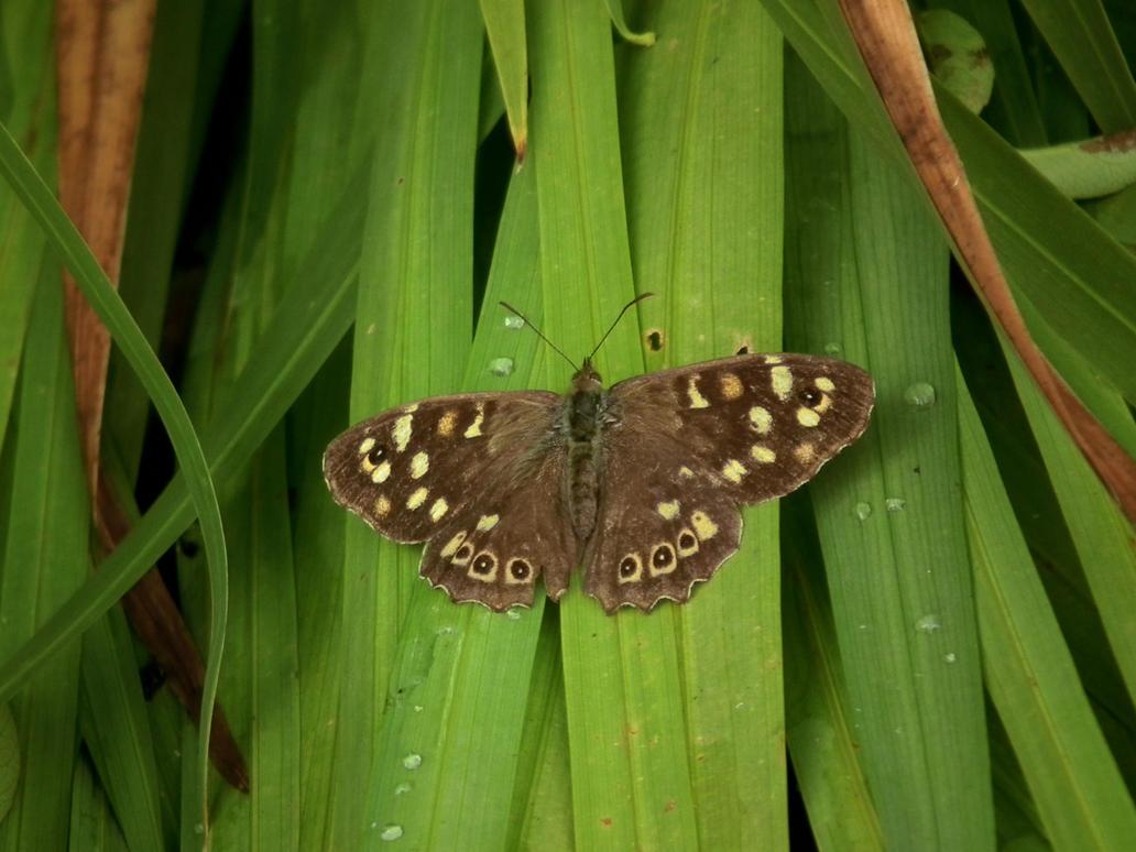 butterflies in the garden 14 by harrietbaxter