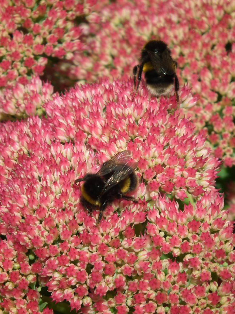 bees by harrietbaxter