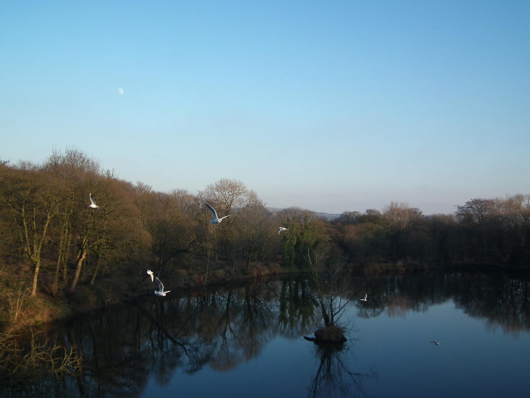 gulls and moon by harrietbaxter