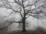 thick morning fog 9