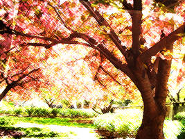 .Sakura. by Sakura-ryuu