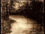 Rainforest River