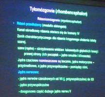 Anatomia 17-10-2012 part 1