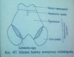 Anatomia 17-10-2012 part 13