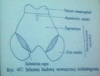Anatomia 17-10-2012 part 13 by Fallen-Angel-Lycoris