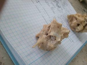 Piramida k. skroniowej part 2