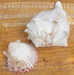 Shells Two
