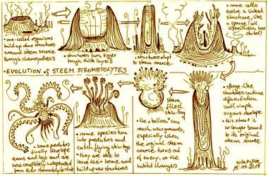 Evolution of steem stromatolites