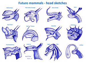 Future mammals - head sketches