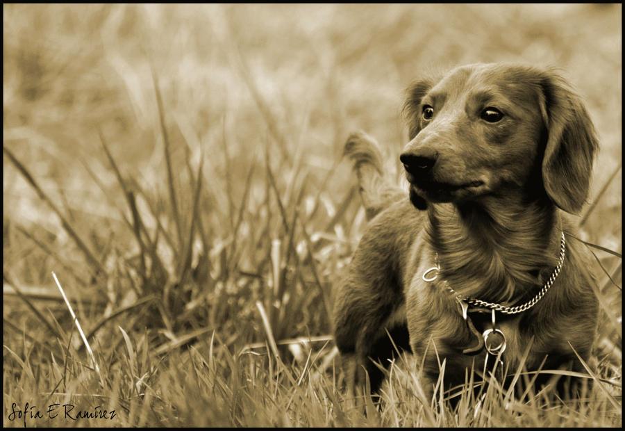 Not Your Average Huntin' Dog by SofiaERamirez