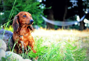 Dog Days of Summer by SofiaERamirez