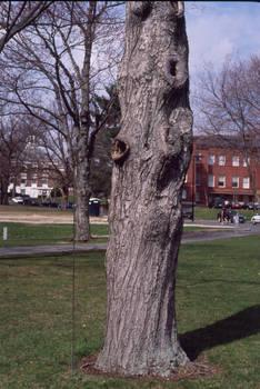 periscope tree