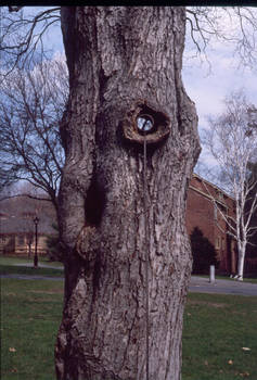 periscope tree 2