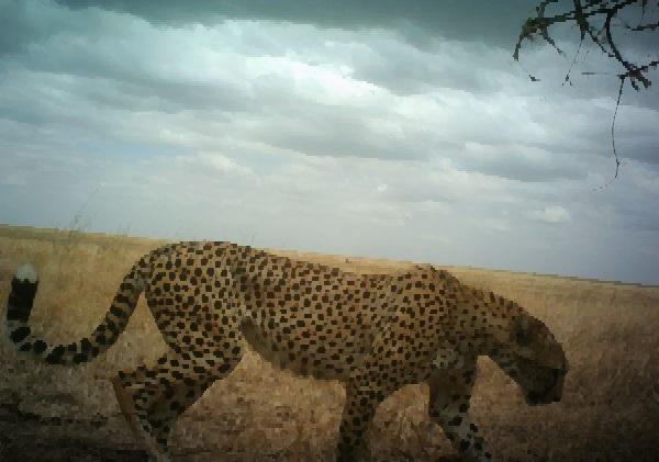 Pixel Leopard by pikachufan9